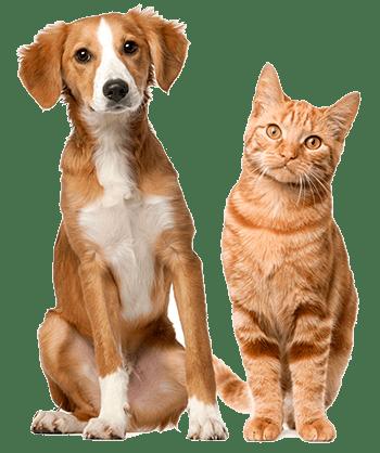 Buscados de tiendas animales
