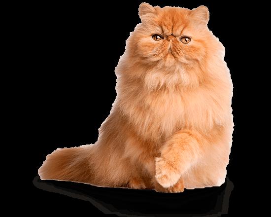 Balanced Feline gato control de peso/castrado