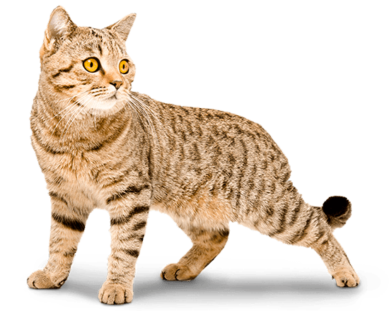 Balanced Feline senior