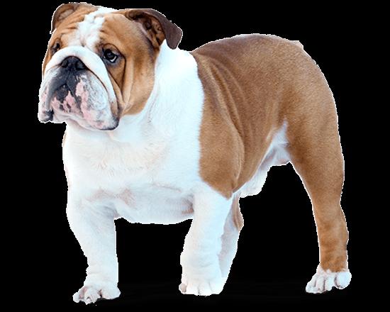 Balanced Canine Adulto control de peso