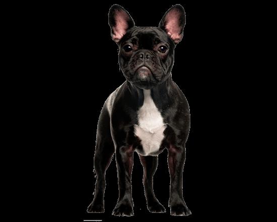 Balanced Canine Adulto con sensibilidad