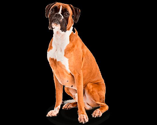 Balanced Canine Adulto raza grande