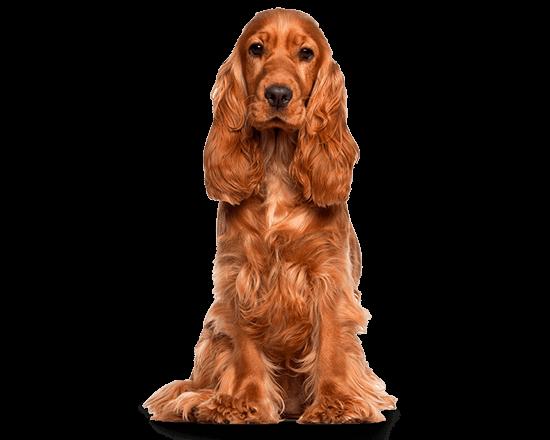 Balanced Canine Adulto raza mediana