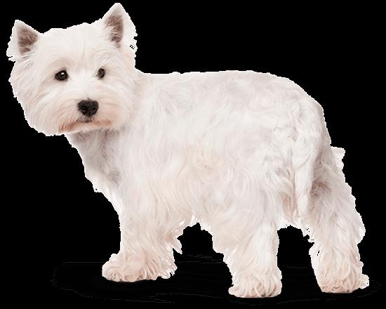 Balanced Canine Adulto raza pequeña
