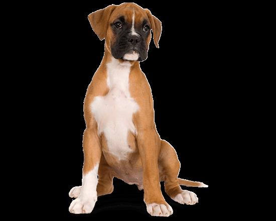 Balanced Canine Cachorro raza grande