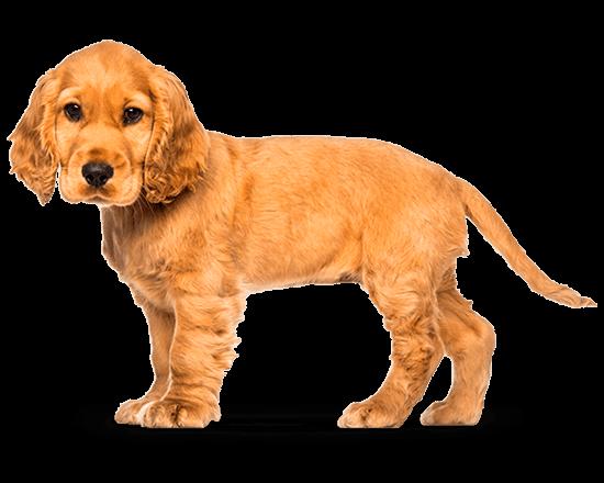 Balanced Canine Cachorro raza mediana