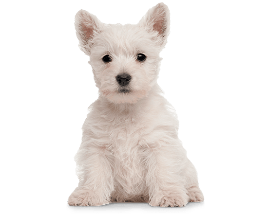 Balanced Canine Cachorro raza pequeña