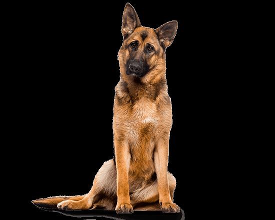 Balanced Canine Senior raza grande