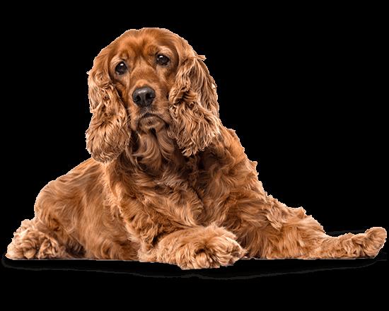 Balanced Canine Senior raza mediana