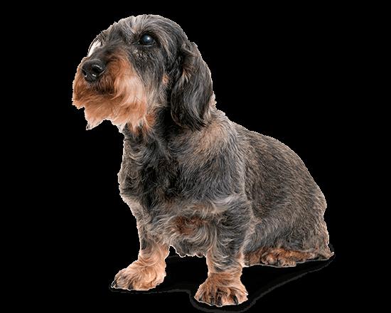 Balanced Canine Senior raza pequeña