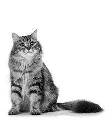 Portal veterinario gato