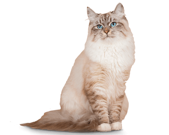 Therapy gato urinary
