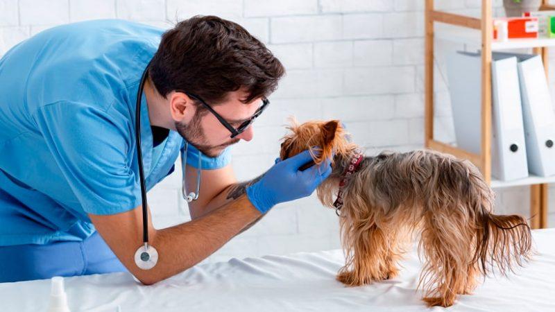 Ansiedad y estrés postraumático en perros