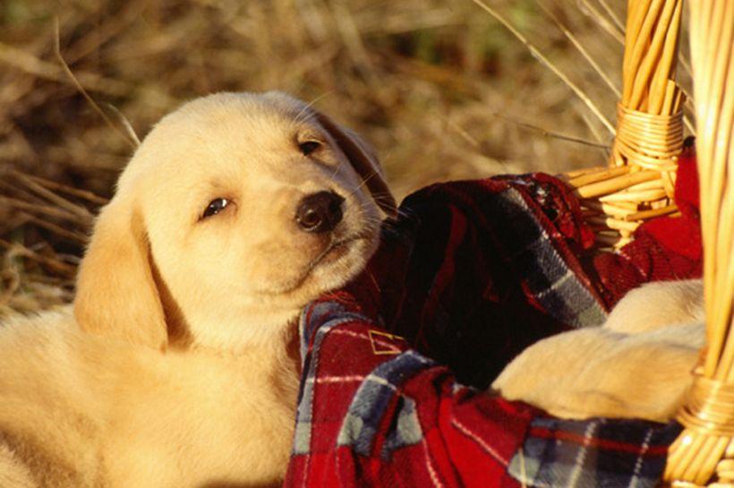 Cinco tips para darle la bienvenida a un cachorro