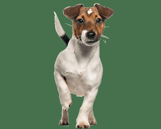 Complete perro adulto raza pequeña