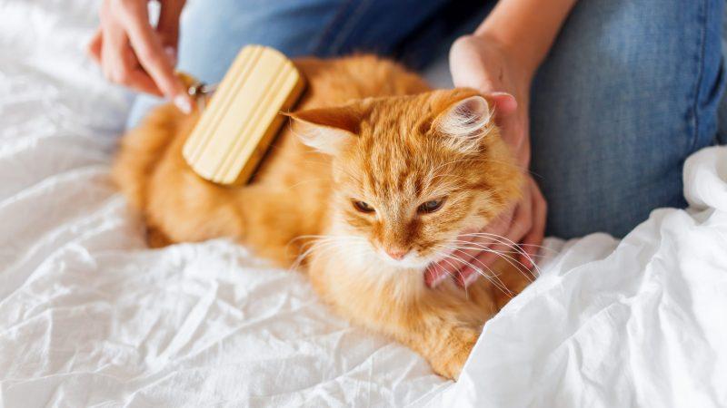 Cuidados especiales para nuestro gato maduro