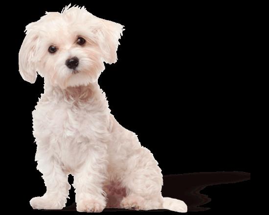 Hop perro cachorro pequeño