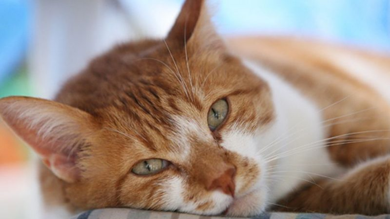 La madurez de nuestros gatos