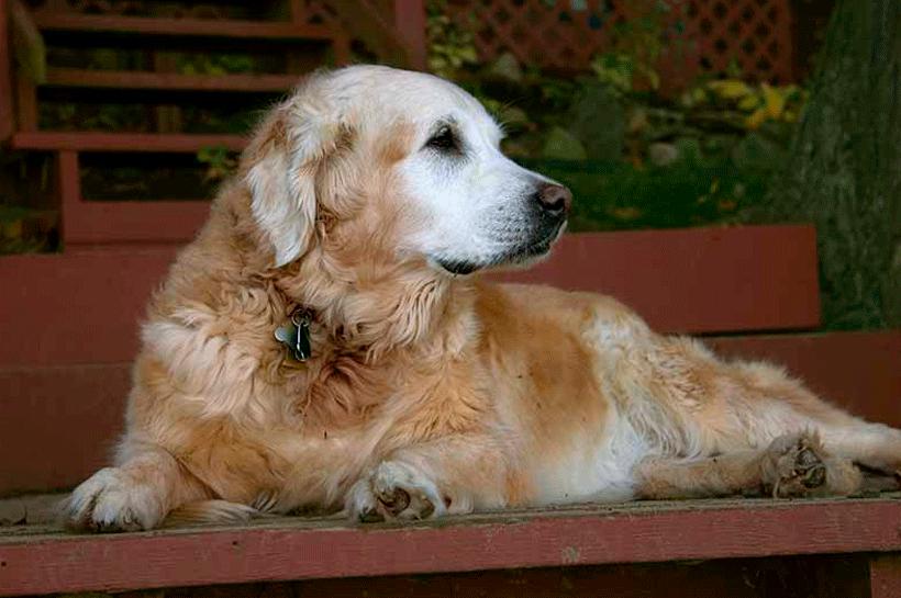 La madurez de nuestros perros