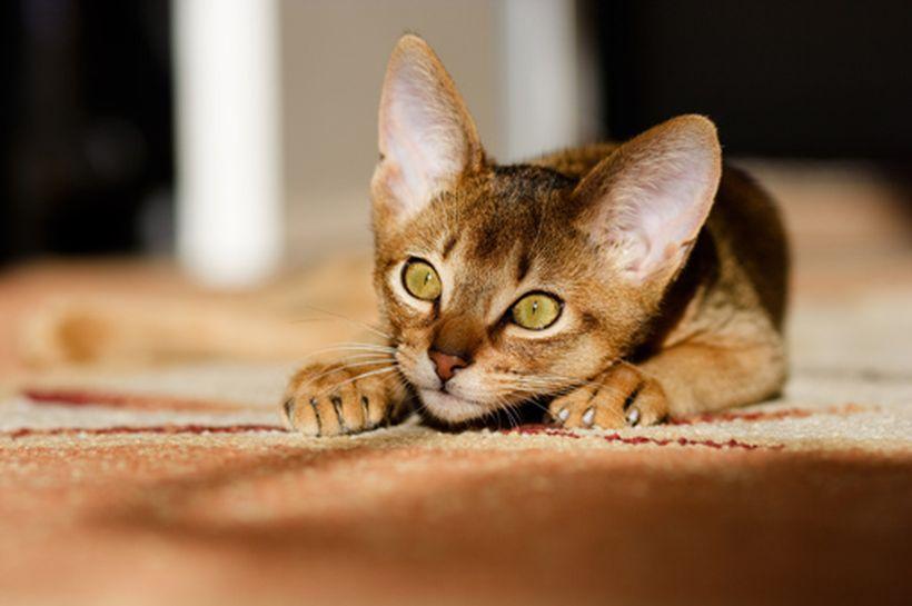 Las preferencias de los gatos a la hora de comer