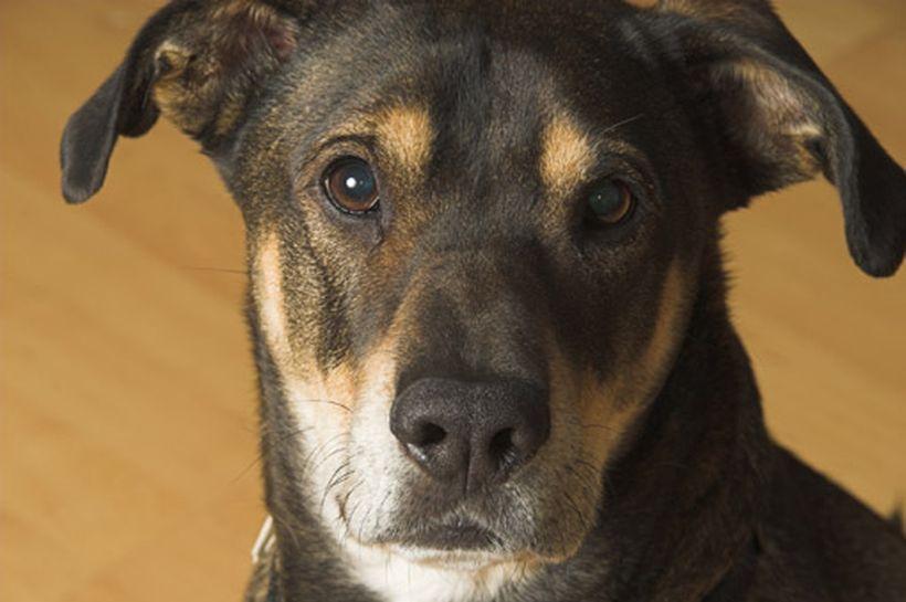 Los cinco sentidos de los perros
