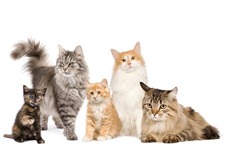 Vitalcan - Nuestras marcas para gatos