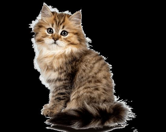 Nutrique baby cat