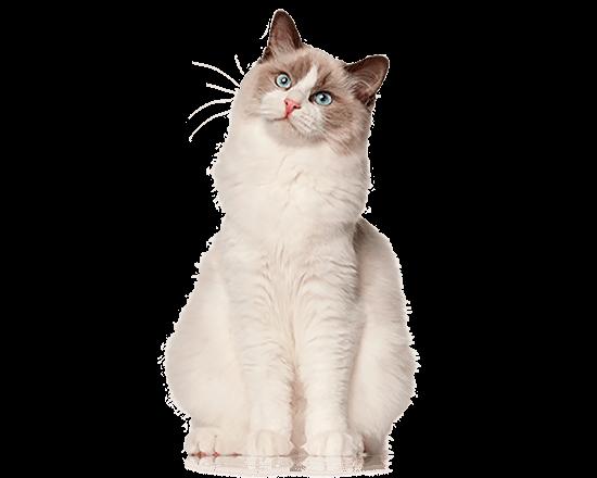 Nutrique healthy cat