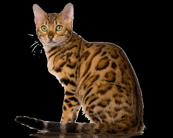 Nutrique cat young