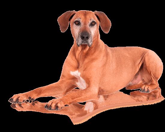 Nutrique dog large adult