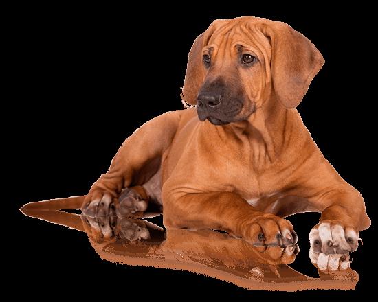 Nutrique dog large puppy
