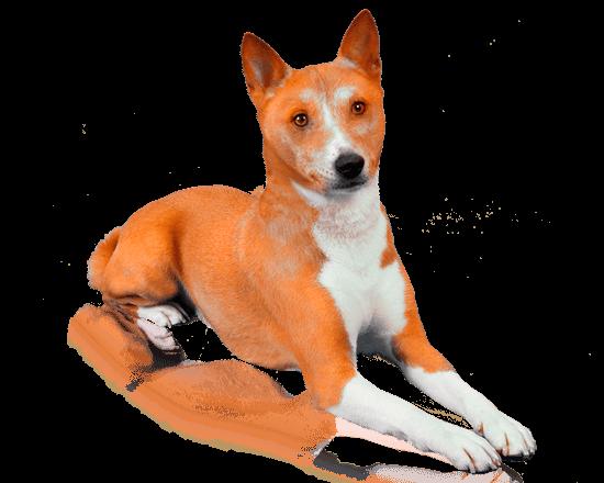 Nutrique dog medium adult