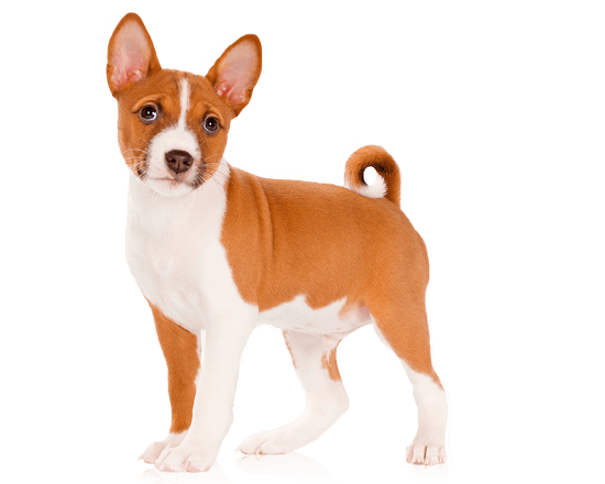 Nutrique dog medium puppy