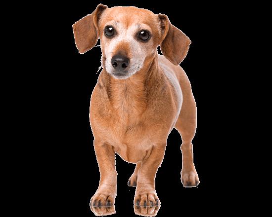 Nutrique dog toy adult