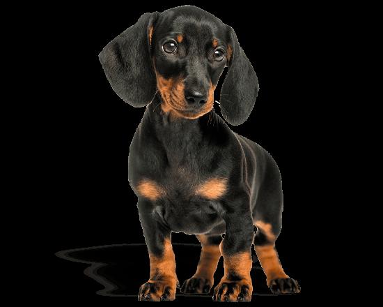 Nutrique dog toy puppy