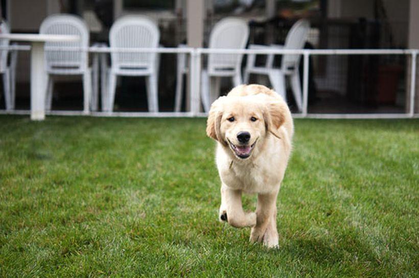 Perros hiperactivos, ¿qué hacer?