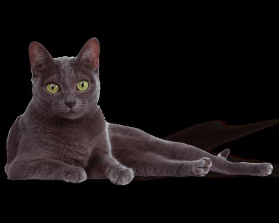 Premium gato adulto