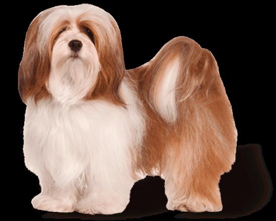 Premium perro adulto raza pequeña