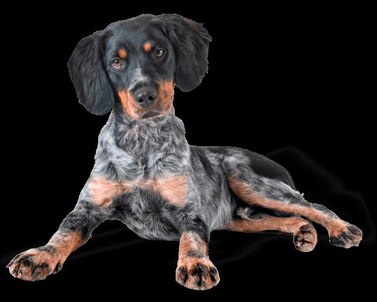 Premium perro cachorro