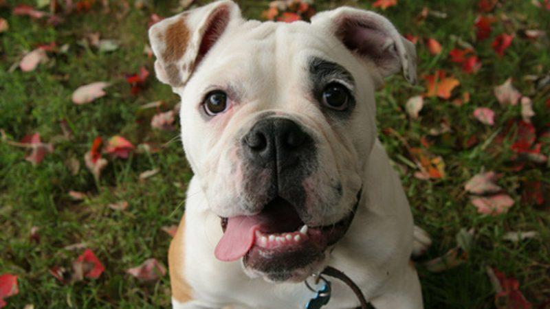 Qué es la tenencia responsable de mascotas