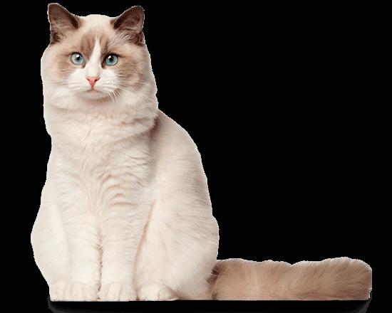 Therapy gato gastro