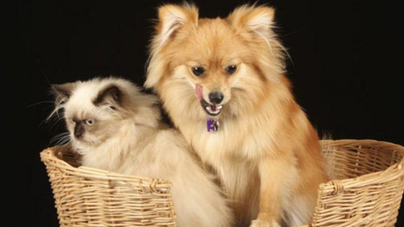 tips para cuidar el pelo de tu mascota