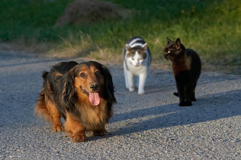 Vagabundeo: perros y gatos